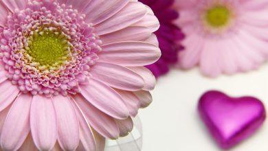 Photo of איזון הצ'אקרה הרביעית- צ'אקרת הלב- המרכז ההוקי בעזרת פרחי באך