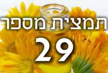תמצית פרחי באך מספר 29- סטאר אוף בית לחם - כוכב בית לחם STAR OF BETHLEHEM