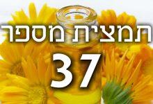 תמצית פרחי באך מספר 37- ווילד רוז - ורד בר WILD ROZE
