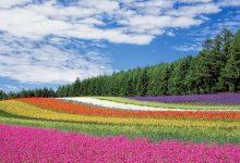 חג האביב ושפע הצבעים