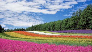 Photo of חג האביב ושפע הצבעים