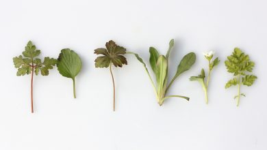 Photo of צמחי מרפא ושילובם בחיינו