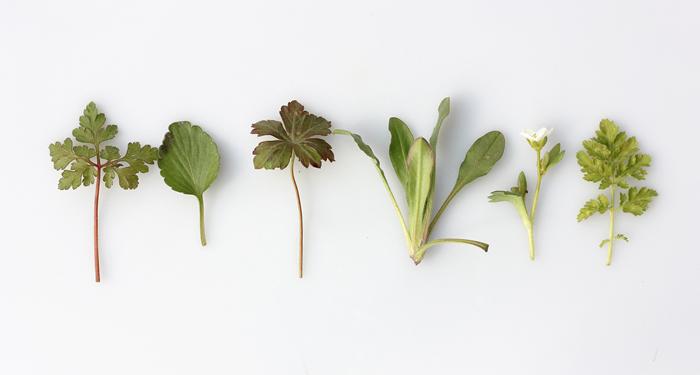 צמחי מרפא ושילובם בחיינו