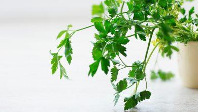 Photo of ניקוי ושיפור תפקוד כבד בעזרת צמחי המרפא