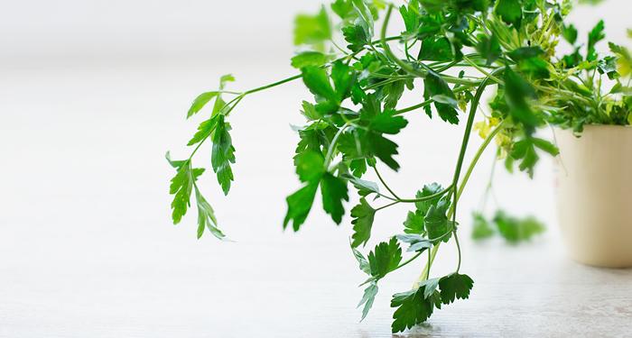 ניקוי ושיפור תפקוד כבד בעזרת צמחי המרפא