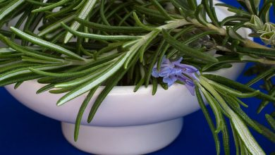 Photo of רוזמרין רפואי – צמח מרפא בעל יתרונות רבים