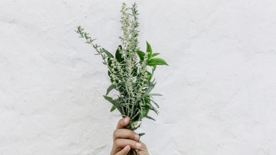 Photo of צמח הג'ינסנג