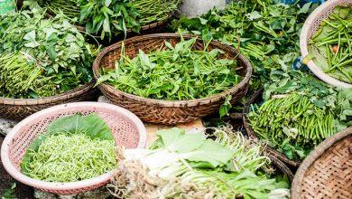 Photo of צמחי מרפא- טיפול תומך בסרטן