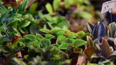 Photo of צמחי מרפא – להתגבר על כאבי מפרקים