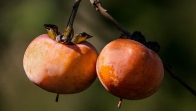 Photo of אפרסמון – ערך תזונתי ויתרונות בריאותיים
