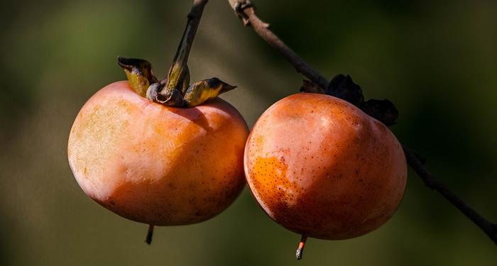 אפרסמון - ערך תזונתי ויתרונות בריאותיים