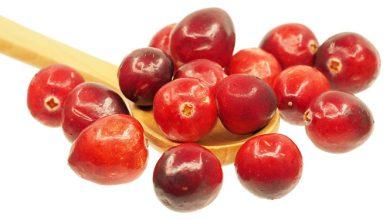 Photo of חמוציות – ערכים תזונתיים ויתרונות בריאותיים