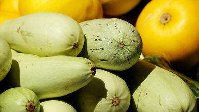 Photo of קישואים – ערכים תזונתיים ויתרונות בריאותיים