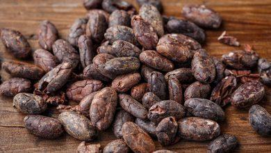 Photo of קקאו – ערכים תזונתיים ויתרונות בריאותיים