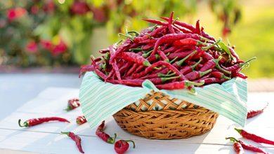 Photo of צ'ילי – ערכים תזונתיים ויתרונות בריאותיים
