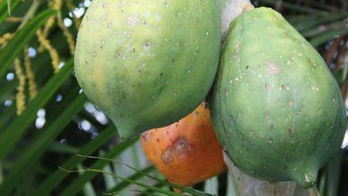 Photo of פאפאיה – ערכים תזונתיים ויתרונות בריאותיים