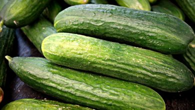 Photo of מלפפון – ערכים תזונתיים ויתרונות בריאותיים