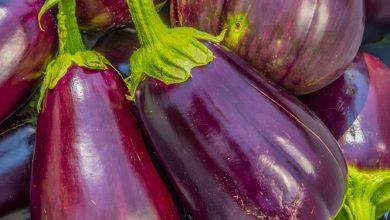 Photo of חציל – ערכים תזונתיים ויתרונות בריאותיים